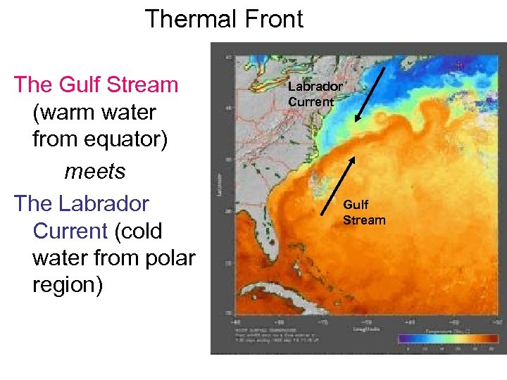 Thermal Front The Gulf Stream (warm water from equator) meets The Labrador Current (cold