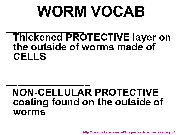 WORM VOCAB _______ Thickened PROTECTIVE layer on the outside of worms made of CELLS