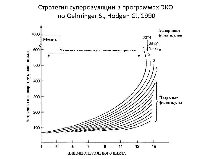 Стратегия суперовуляции в программах ЭКО, по Oehninger S. , Hodgen G. , 1990