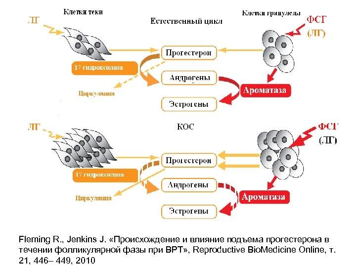 Fleming R. , Jenkins J. «Происхождение и влияние подъема прогестерона в течении фолликулярной фазы