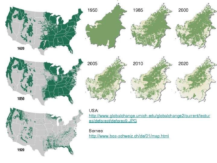 USA: http: //www. globalchange. umich. edu/globalchange 2/current/lectur es/deforest/defores 9. JPG Borneo: http: //www. bos-schweiz.