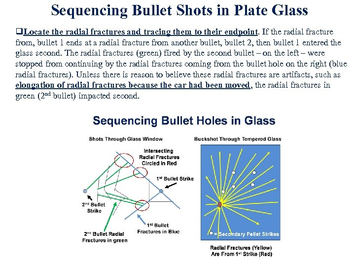 Sequencing Bullet Shots in Plate Glass q. Locate the radial fractures and tracing them