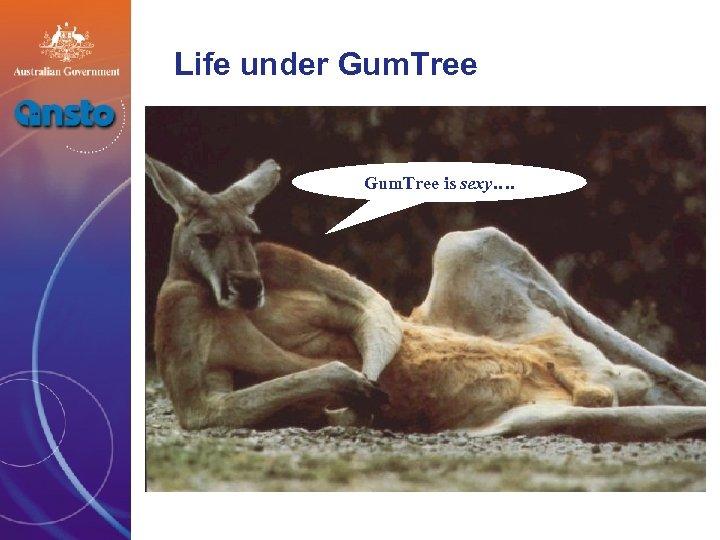 Life under Gum. Tree is sexy….