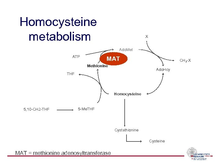 Homocysteine metabolism X Ado. Met ATP MAT Methionine CH 3 -X Ado. Hcy THF