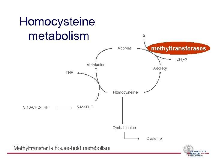Homocysteine metabolism X Ado. Met methyltransferases CH 3 -X Methionine Ado. Hcy THF Homocysteine