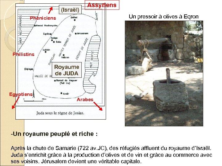 (Israël) Assyriens Un pressoir à olives à Eqron Phéniciens Philistins Royaume de JUDA Egyptiens