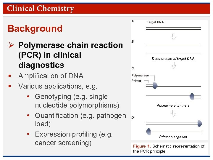 Background Ø Polymerase chain reaction (PCR) in clinical diagnostics § Amplification of DNA §