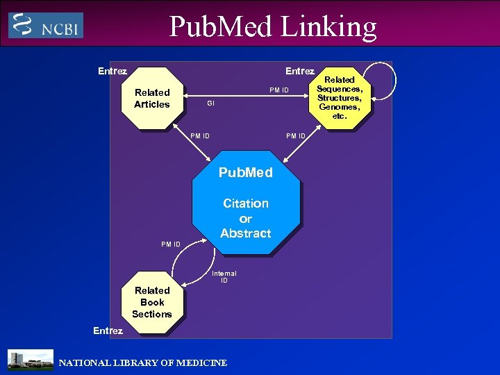 Pub. Med Linking Entrez Related Articles PM ID GI PM ID Pub. Med PM