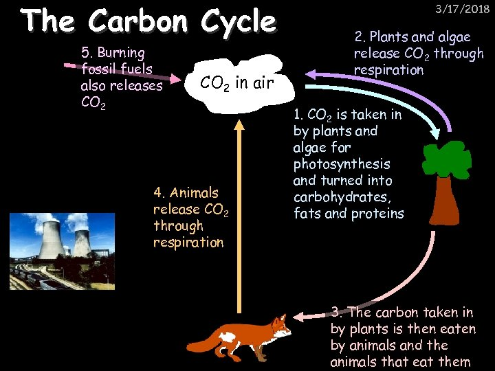 The Carbon Cycle 5. Burning fossil fuels also releases CO 2 in air 4.