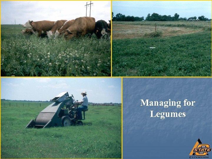 Managing for Legumes