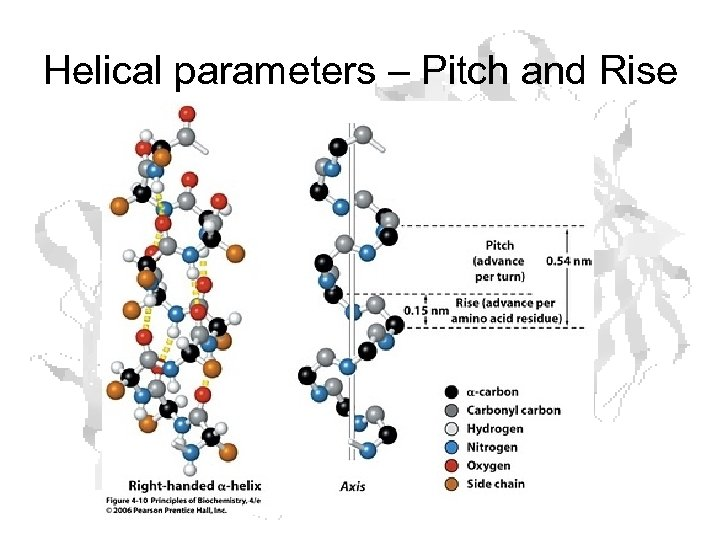 Helical parameters – Pitch and Rise