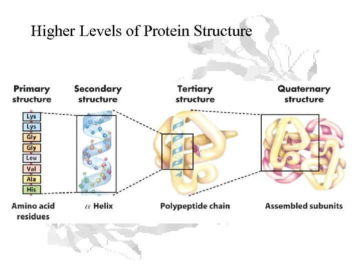 Higher Levels of Protein Structure