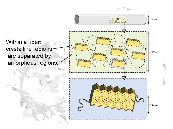 Within a fiber: crystalline regions are separated by amorphous regions.