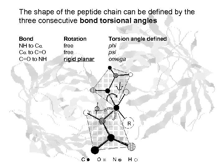 The shape of the peptide chain can be defined by the three consecutive bond