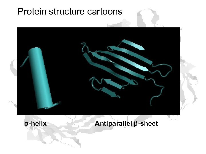 Protein structure cartoons a-helix Antiparallel b-sheet