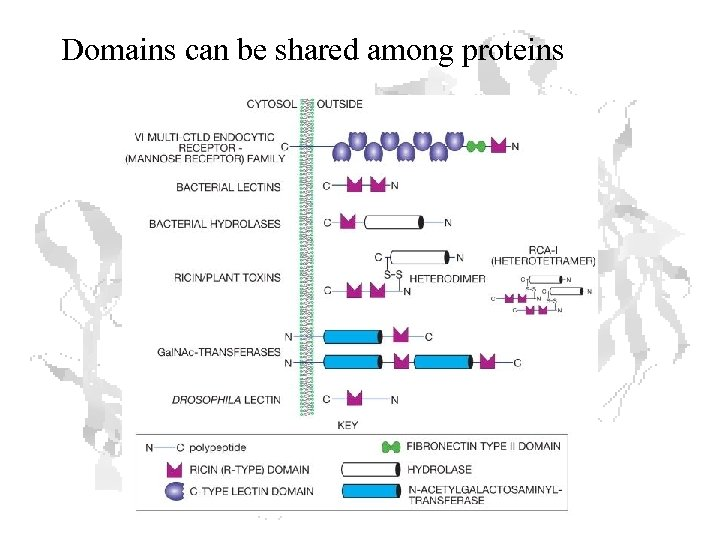 Domains can be shared among proteins