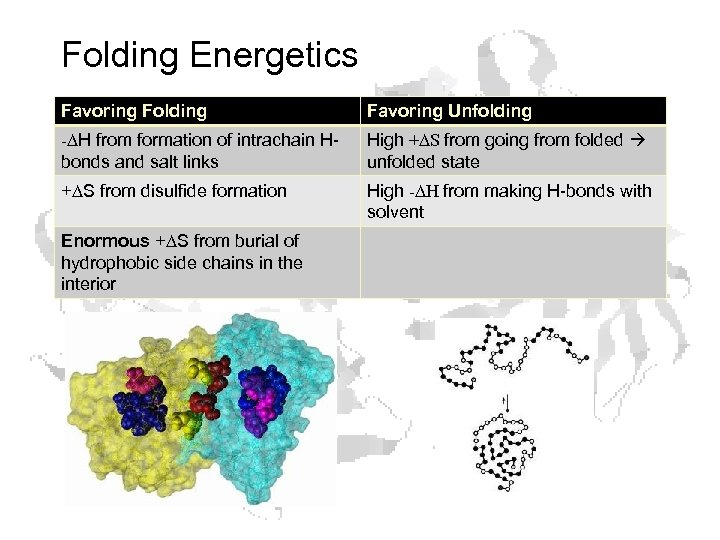 Folding Energetics Favoring Folding Favoring Unfolding -DH from formation of intrachain Hbonds and salt