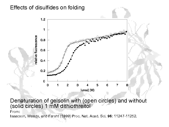 Effects of disulfides on folding Denaturation of gelsolin with (open circles) and without (solid