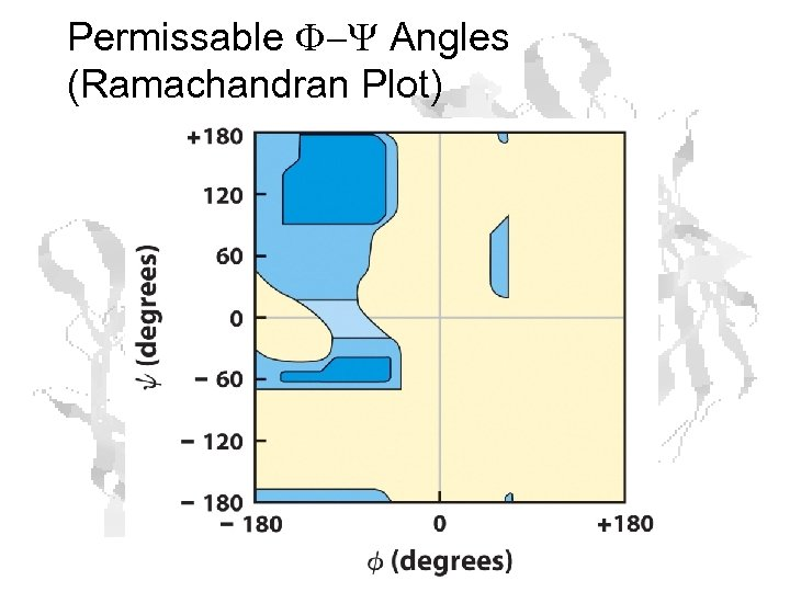 Permissable F-Y Angles (Ramachandran Plot)