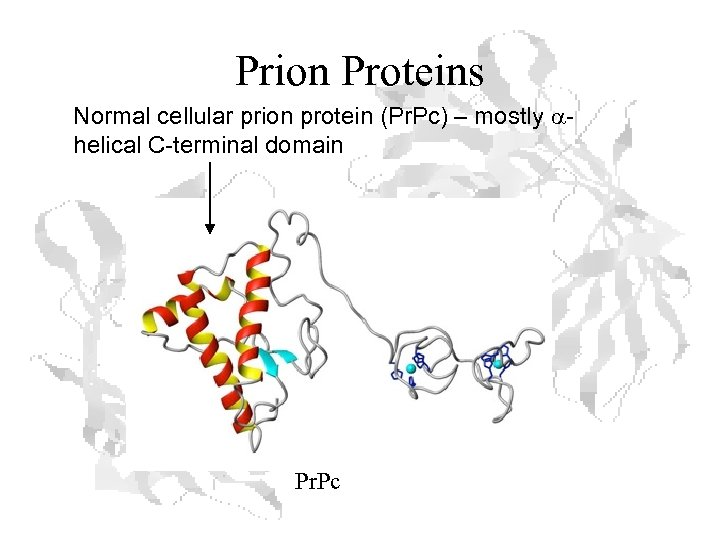 Prion Proteins Normal cellular prion protein (Pr. Pc) – mostly ahelical C-terminal domain Pr.