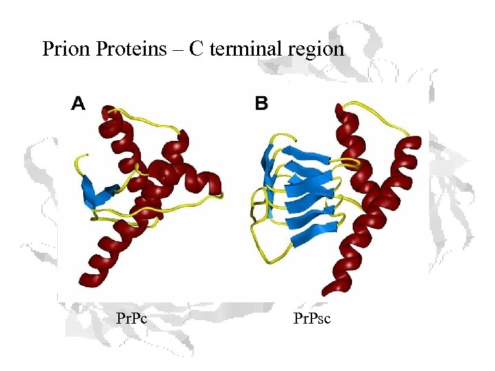 Prion Proteins – C terminal region Pr. Pc Pr. Psc