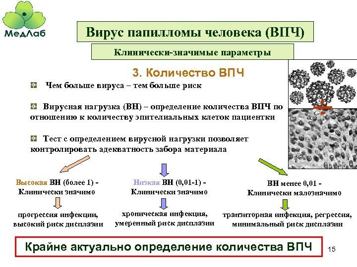 Вирус папилломы человека (ВПЧ) Клинически-значимые параметры 3. Количество ВПЧ Чем больше вируса – тем