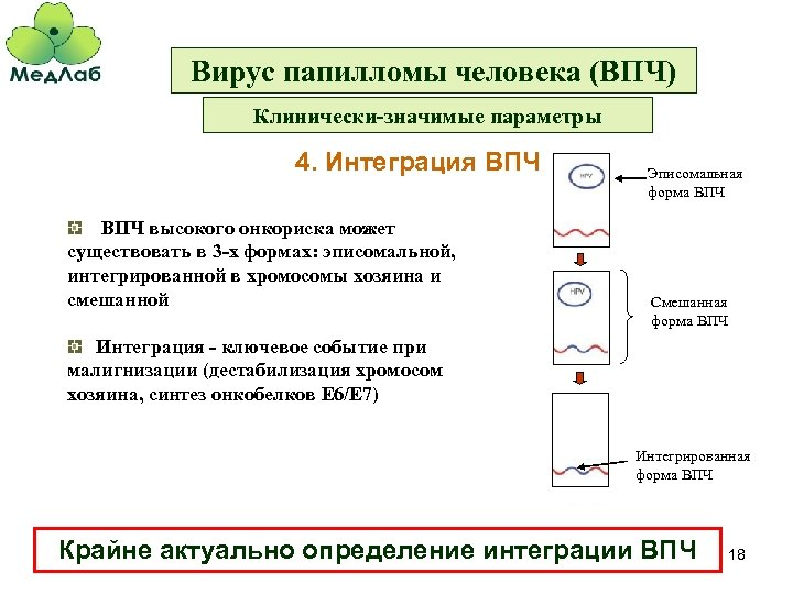 Вирус папилломы человека (ВПЧ) Клинически-значимые параметры 4. Интеграция ВПЧ высокого онкориска может существовать в
