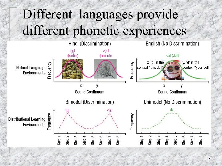 Different languages provide different phonetic experiences 6