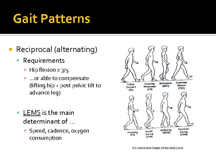 Gait Patterns Reciprocal (alternating) Requirements ▪ Hip flexion ≥ 3/5 ▪ …or able to