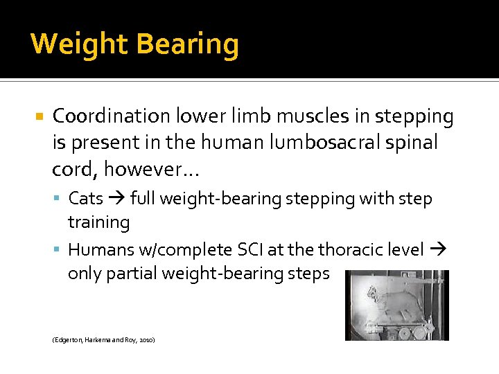 Weight Bearing C 00 rdination lower limb muscles in stepping is present in the