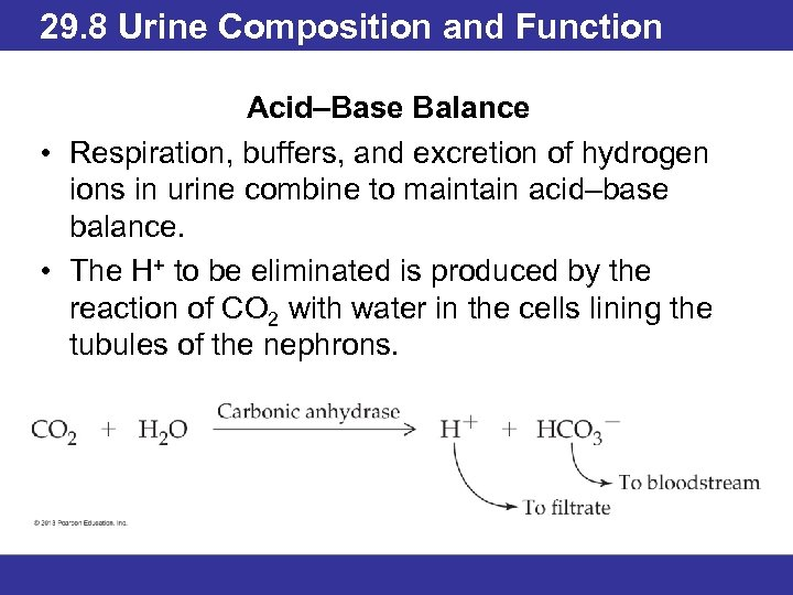 29. 8 Urine Composition and Function Acid–Base Balance • Respiration, buffers, and excretion of