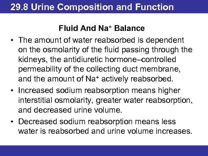 29. 8 Urine Composition and Function Fluid And Na+ Balance • The amount of