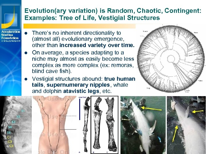 Evolution(ary variation) is Random, Chaotic, Contingent: Examples: Tree of Life, Vestigial Structures Acceleration Studies
