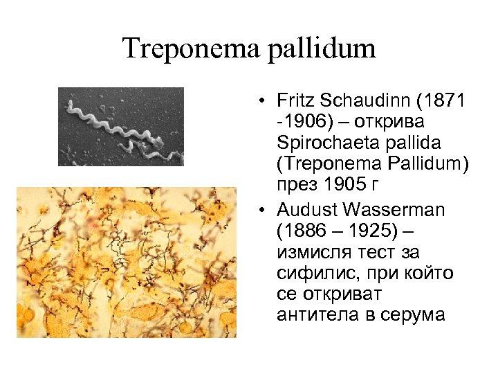 Treponema pallidum • Fritz Schaudinn (1871 -1906) – открива Spirochaeta pallida (Treponema Pallidum) през