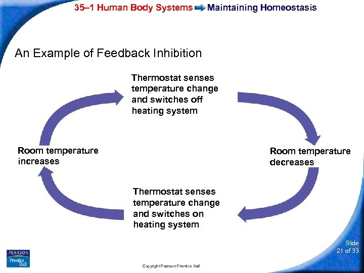 35– 1 Human Body Systems Maintaining Homeostasis An Example of Feedback Inhibition Thermostat senses