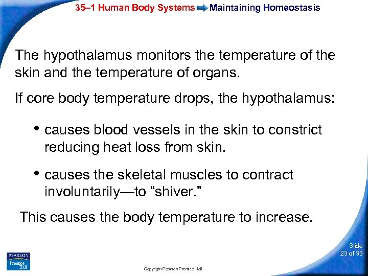 35– 1 Human Body Systems Maintaining Homeostasis The hypothalamus monitors the temperature of the