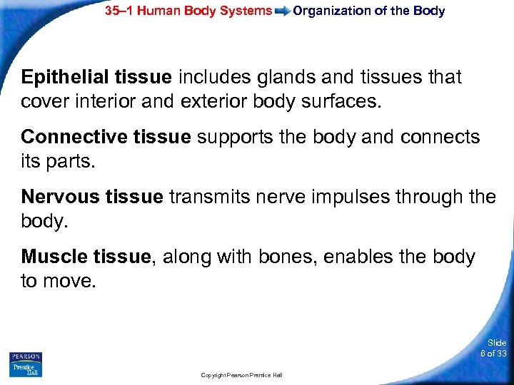 35– 1 Human Body Systems Organization of the Body Epithelial tissue includes glands and