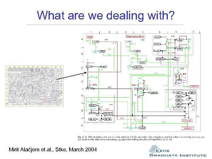 What are we dealing with? Mirit Aladjem et al. , Stke, March 2004