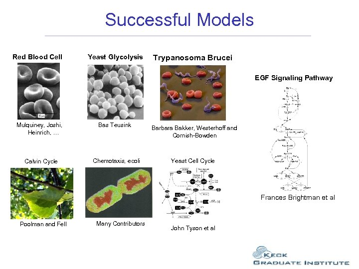 Successful Models Red Blood Cell Yeast Glycolysis Trypanosoma Brucei EGF Signaling Pathway Mulquiney, Joshi,