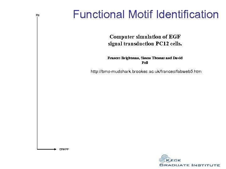Functional Motif Identification Computer simulation of EGF signal transduction PC 12 cells. Frances Brightman,