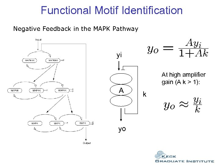 Functional Motif Identification Negative Feedback in the MAPK Pathway yi At high amplifier gain