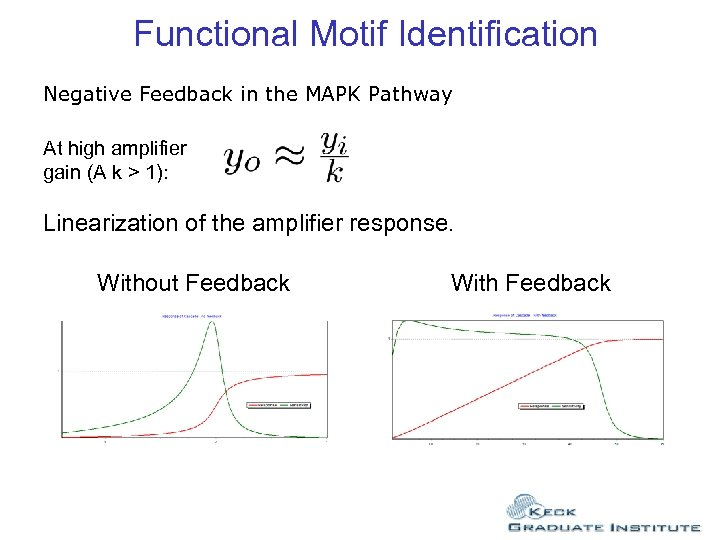Functional Motif Identification Negative Feedback in the MAPK Pathway At high amplifier gain (A