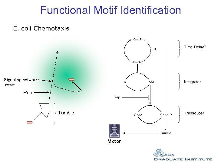 Functional Motif Identification E. coli Chemotaxis Signaling network reset Run Tumble Motor