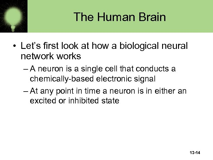 The Human Brain • Let's first look at how a biological neural networks –