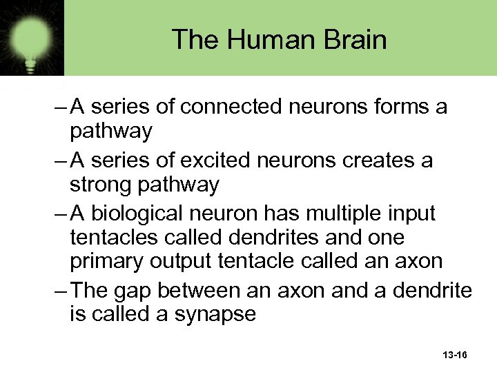 The Human Brain – A series of connected neurons forms a pathway – A