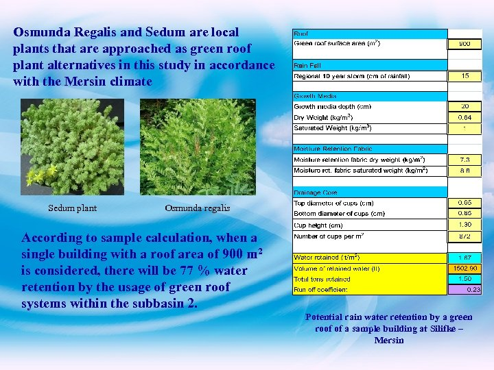 Osmunda Regalis and Sedum are local plants that are approached as green roof plant