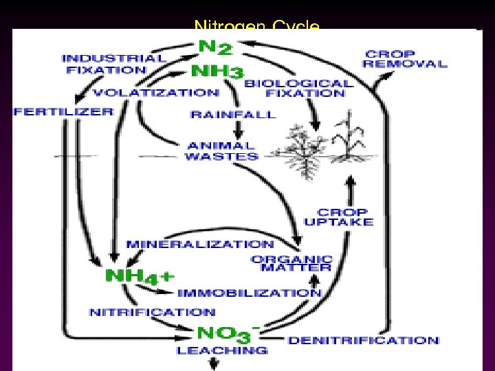 …Nitrogen Cycle
