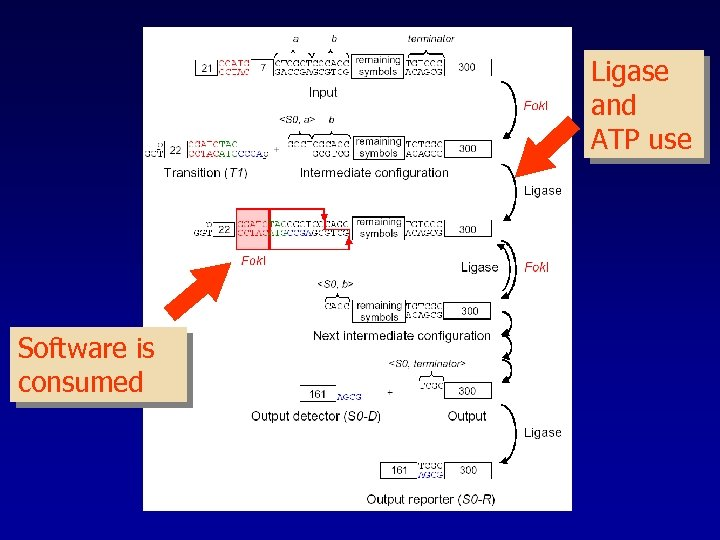 Ligase and ATP use Software is consumed