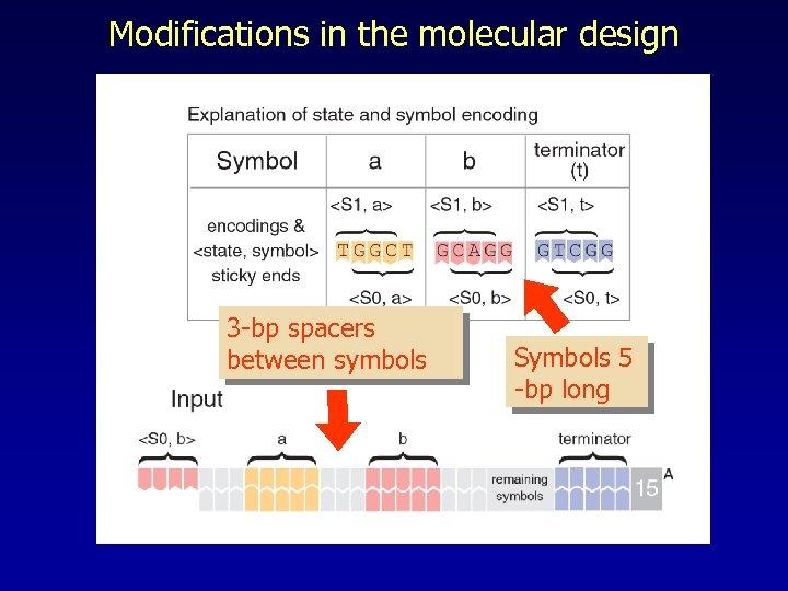 Modifications in the molecular design 3 -bp spacers between symbols Symbols 5 -bp long