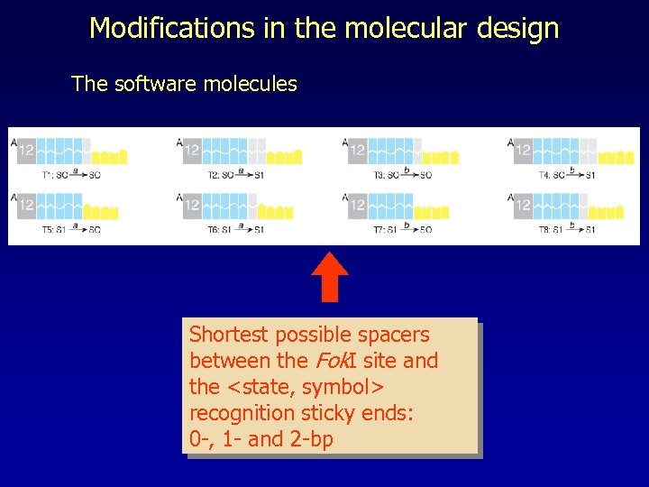 Modifications in the molecular design The software molecules Shortest possible spacers between the Fok.